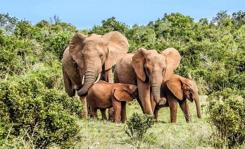 Un ejército verde para proteger la selva de Costa de Marfil