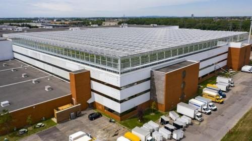 Instalaron una granja sobre un techo en Montréal