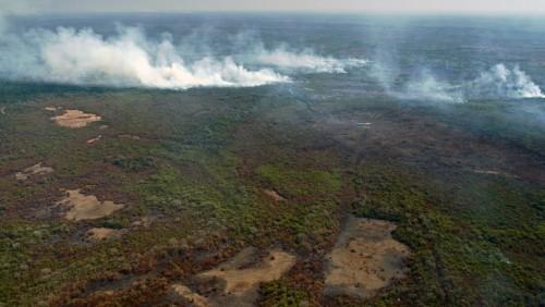 El Pantanal en peligro por los incendios