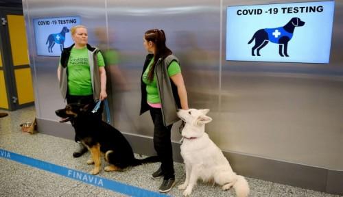 En Finlandia también usan perros detectores de Covid 19
