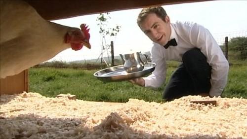 En Inglaterra existe un hotel para gallinas