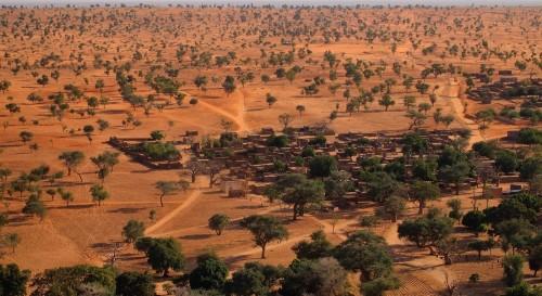Buena noticia: hay más árboles de lo pensado en el Sahel