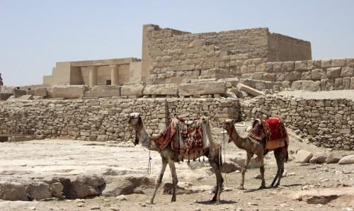 Egipto prohíbe los paseos con dromedarios en sitios arqueológicos