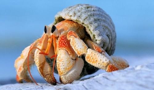 Se buscan casas para cangrejos ermitaños en Tailandia