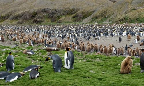 Un iceberg gigantesco amenaza las colonias de pingüinos de las Georgias del Sur