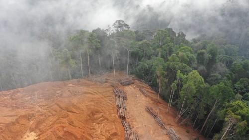 Deforestación en Brasil: al nivel  más alto desde 2008