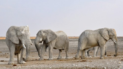 Insólito: Namibia vende sus elefantes