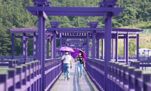 En Corea: dos islas pintadas de violeta para reactivar su turismo