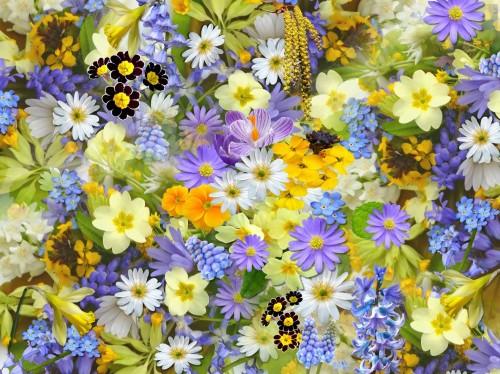 En Holanda. fabrican tapabocas que se transforman en flores