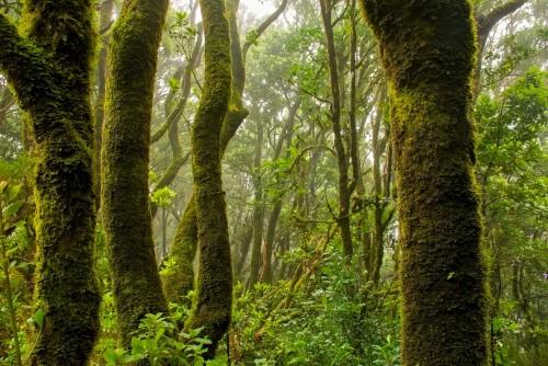 Solo 3% del globo sigue ecologicamente intacto