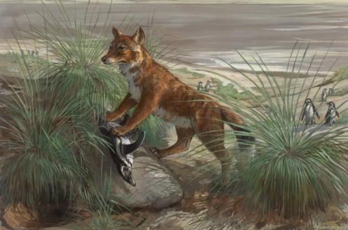 Así era el lobo de las Malvinas, el único mamífero terrestre de las islas