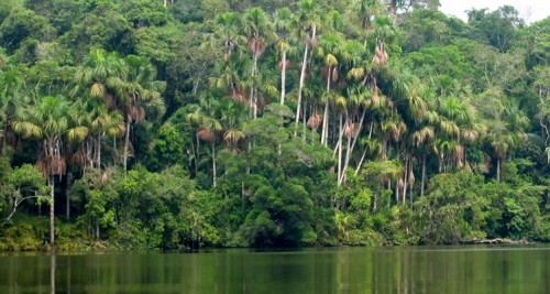 Los guardianes de la selva peruana