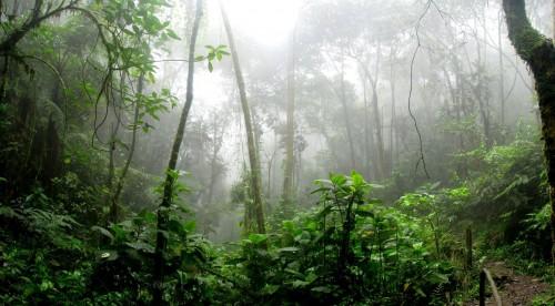 El Amazonas es ahora un emisor de CO2