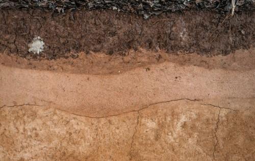 ¿Qué nos dice el color del suelo?