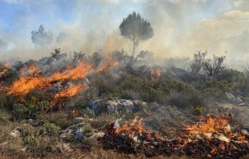 ¿Cómo sobreviven los animales a los incendios?