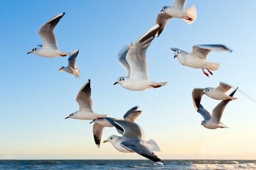 ¿Cuántas aves hay sobre la Tierra?