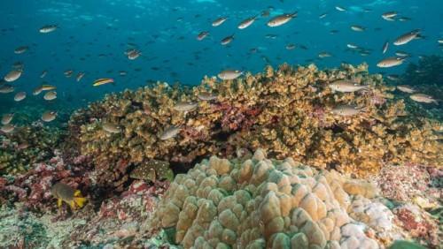 Panamá fue nombrado Líder Azul por proteger el océano
