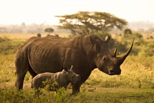 Cuántos individuos hace falta para asegurar la supervivencia de una especie animal
