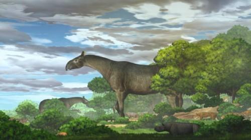 Descubrieron en China restos de gigantescos rinocerontes