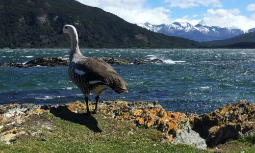 Ushuaia y su naturaleza durante la primavera más austral del mundo