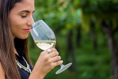 La Ruta del Vino de Tucumán
