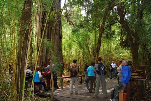 Una visita al parque nacional de los colosos milenarios