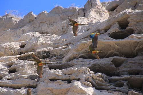 De Viedma a Bahía Creek: la Ruta 1 en verano