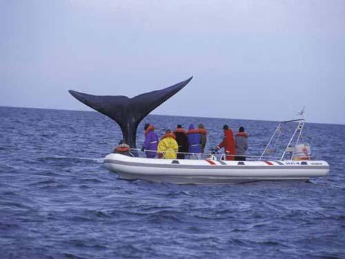 Transmisión de la llegada de ballenas a Península Valdés