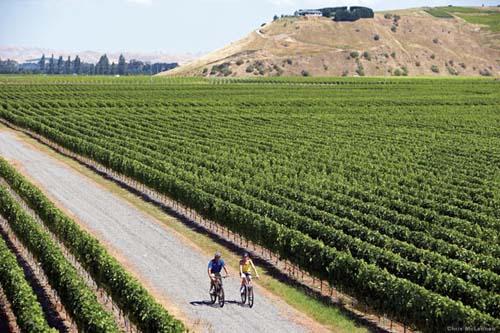 El circuito de los vinos del Pacifico Sur