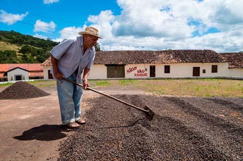 La Ruta del Café Verde en el estado de Ceará