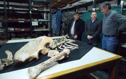 Presentaron el Murusraptor, un nuevo dinosaurio, en el museo