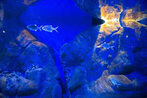 El acuario más grande América Latina abre en Río