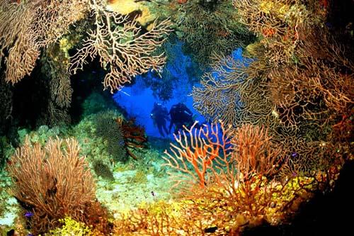 Las mejores experiencias submarinas del Caribe