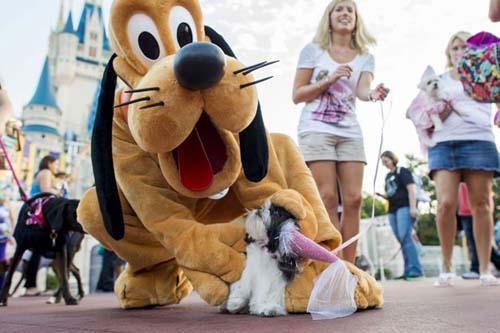 Disney acepta perros en sus hoteles