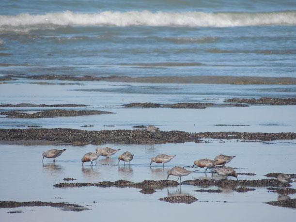 Cambio climático y riesgo para las aves