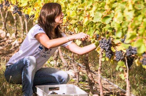 Bodega & Sala de Degustación The Vines of Mendoza